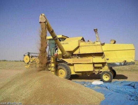 جمع القمح والشعير
