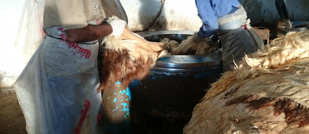 تجفيف الصوف بعد عملية الغسيل